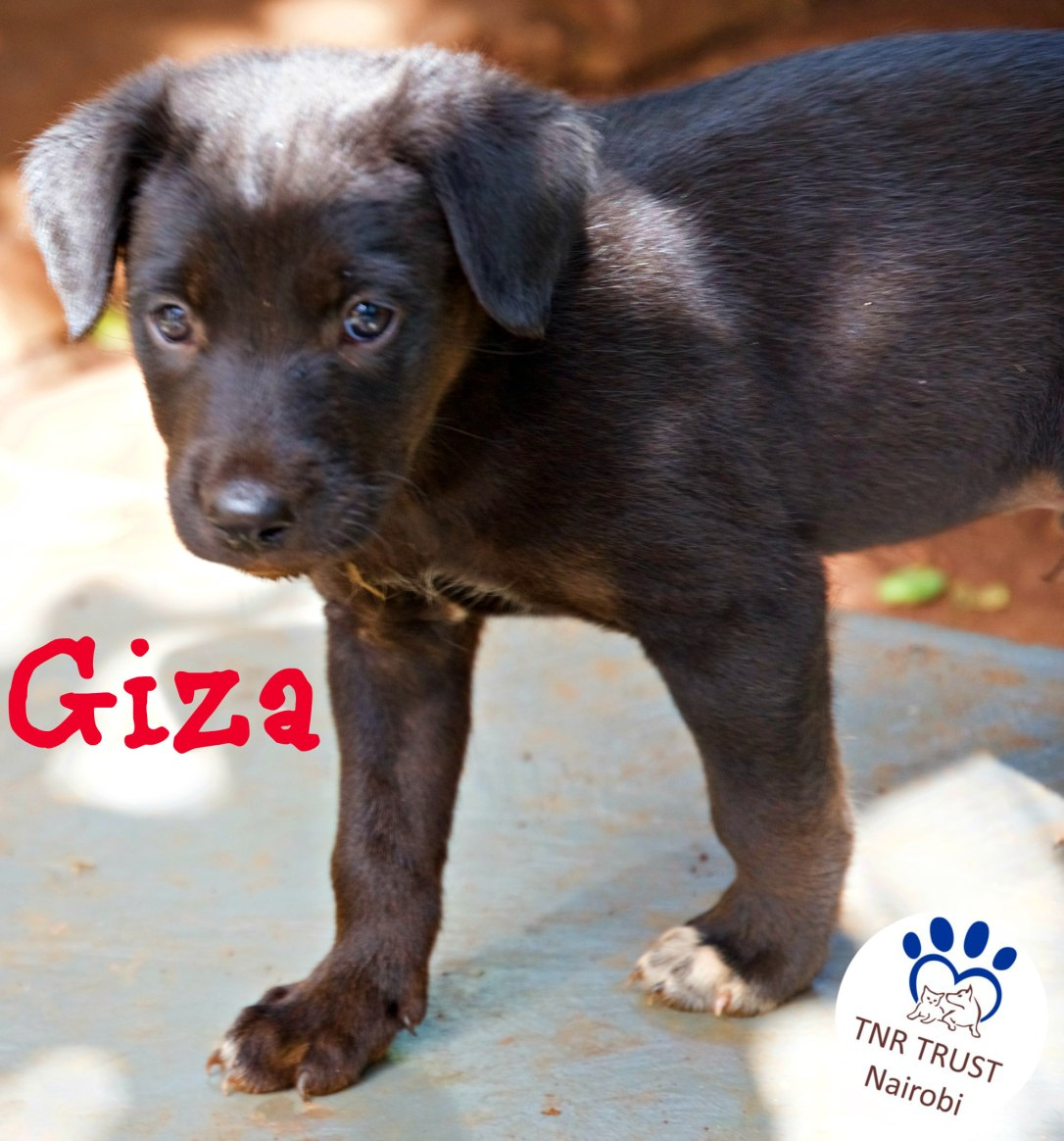 GIZA had just gone to a foster home when he was adopted