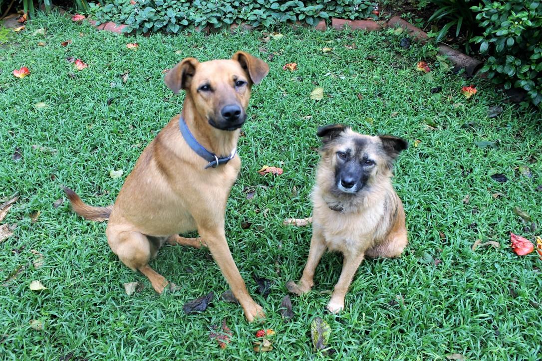 Dora and Farah,: both love treats!