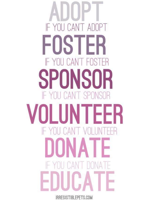 Adopt Foster Sponsor Volunteer Donate Educate.jpg