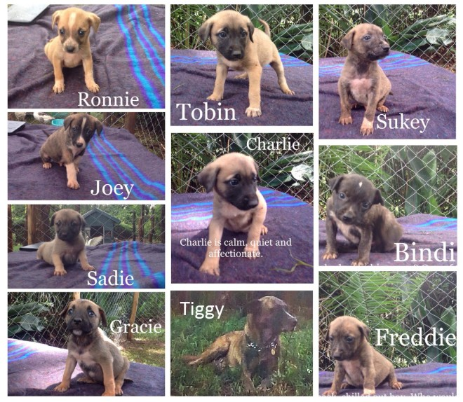 Poster Tiggy and pups 2 img.jpg