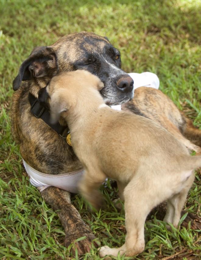 Tiggy's Puppies - 10