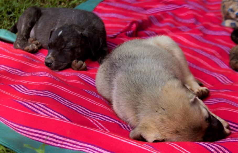 Tiggy's Puppies - 146
