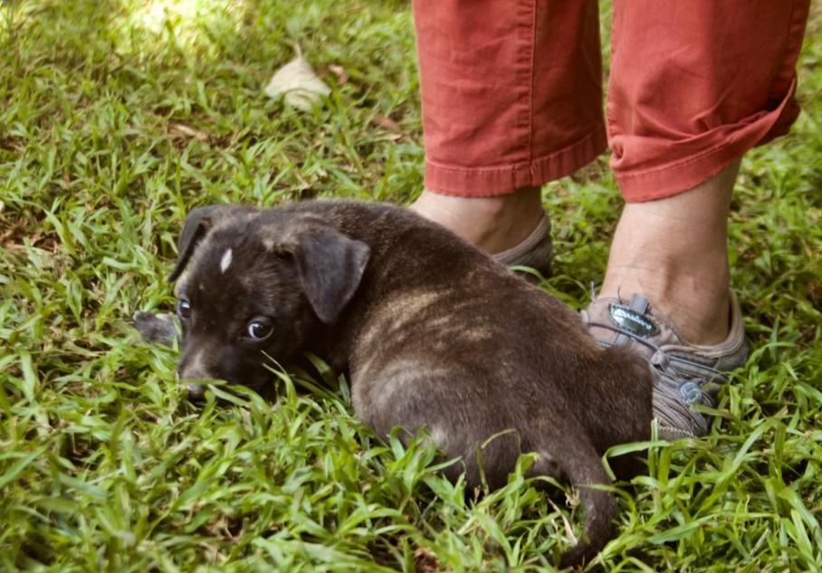 Tiggy's Puppies - 16