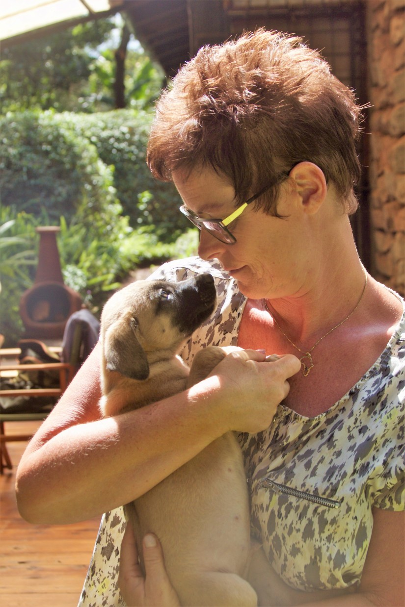 !! PUPPY PICTURES!! Tiggy and pups – up foradoption