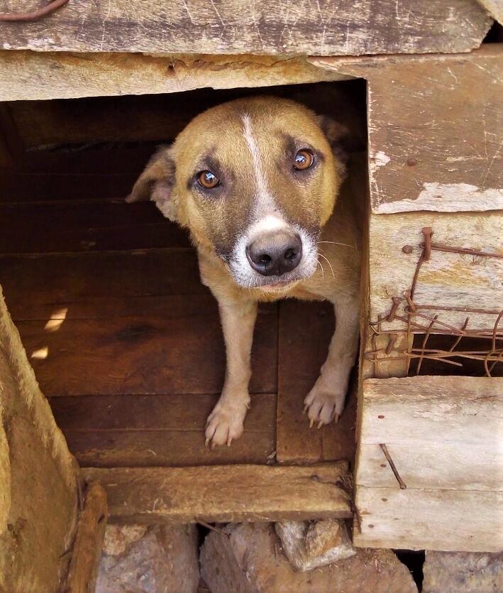 Guard Dog in Rural Kenya