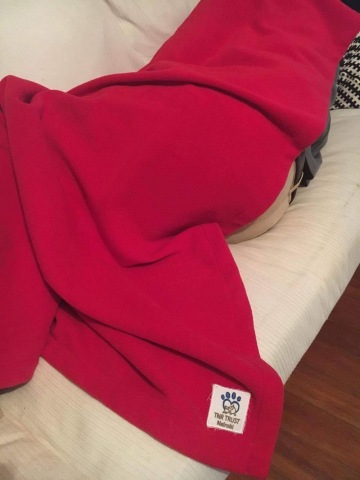 Man flu - fleece blanket.JPG