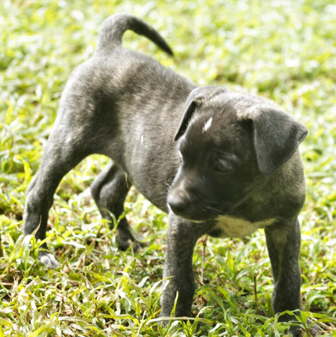 Tiggy's Puppies Bindie
