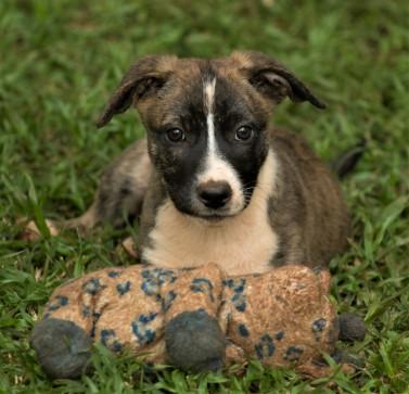 Tiggy's Puppies Joey