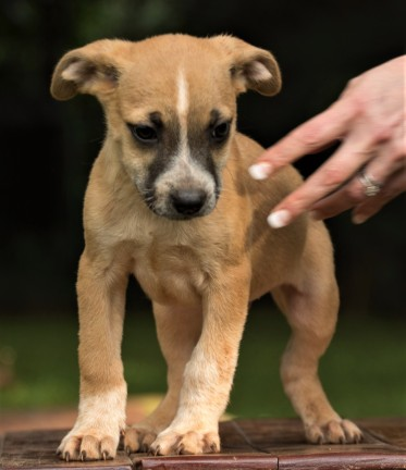 Tiggy's Puppies Ronnie