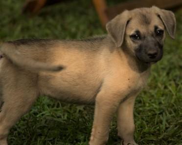 Tiggy's Puppies Sadie
