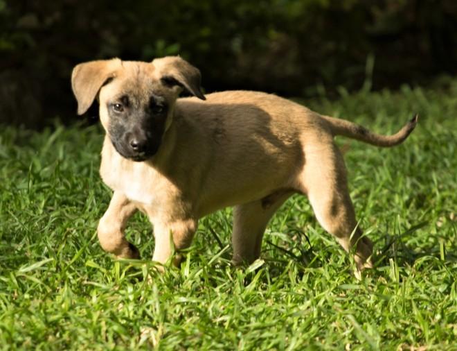 Tiggy's Puppies Tobin
