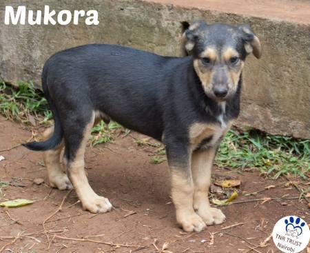Mukora