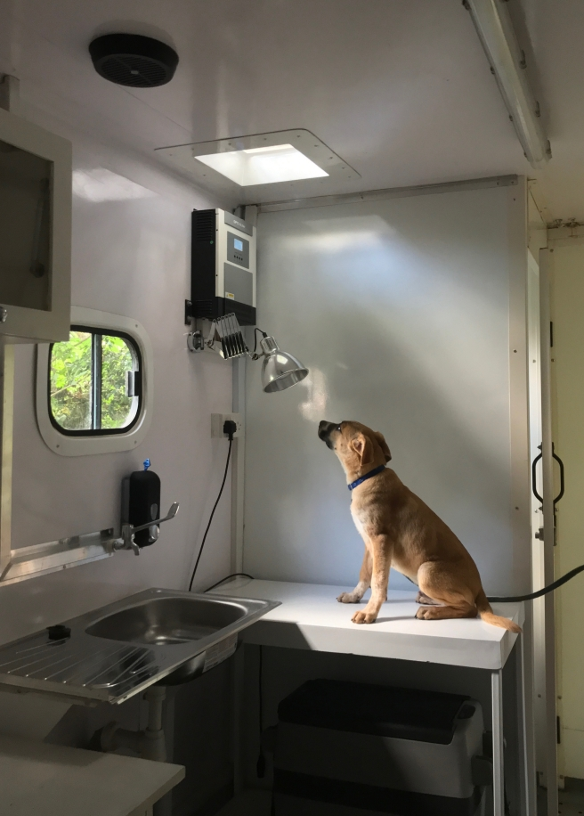 TNR Mobile Clinic - 26